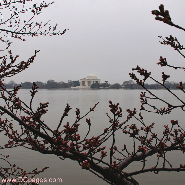 Wednesday, 4:23 pm EST, March 19, 2008, Cherry Blossom View of the Jefferson Memorial
