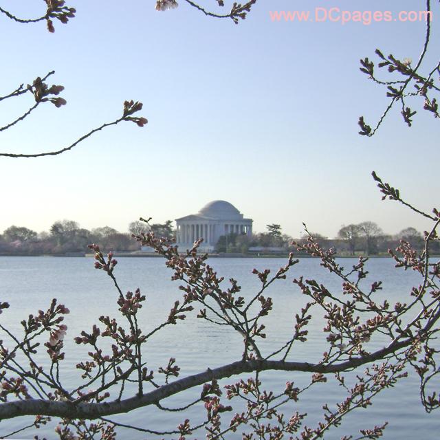Easter Sunday, March 23, 2008 Cherry Blossom View of the Jefferson Memorial