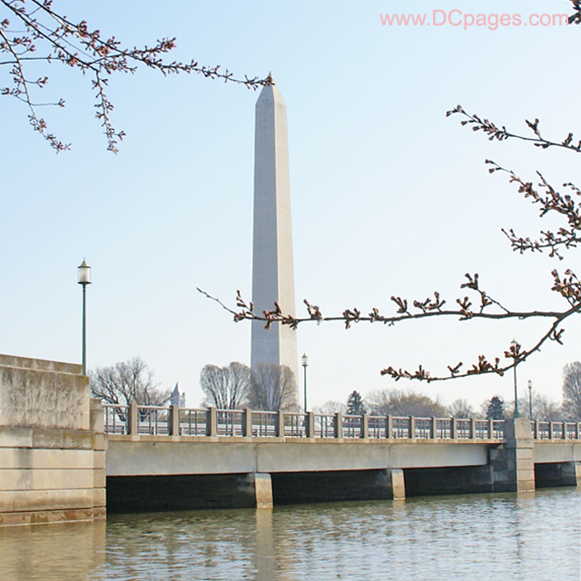 Tuesday, March 25, 2008 9:10 am EST, Cherry Blossom View of the Washington Monument.