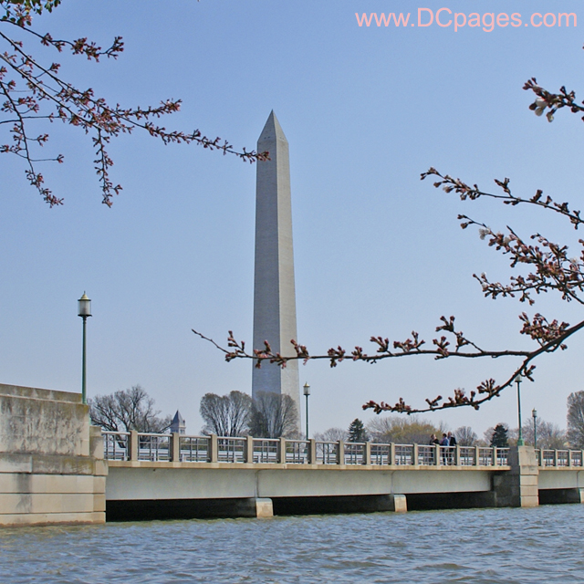 Wednesday, March 27, 2008 9:25 am EST, Cherry Blossom View of the Washington Monument.