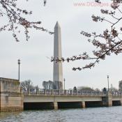 Friday, March 28, 2008 9:35 am EST, Cherry Blossom View of the Washington Monument.
