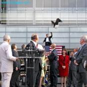 American Bald Eagle lands to open Newseum