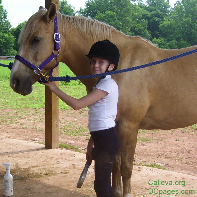 Grooming and caring for your horse ranks right up there with riding the horse.