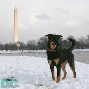 DCpages newest journalist, Denali, went searching the National Mall for a perfect spot to build a snowman.