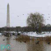 As Denali was heading to the Washington monument she noticed a flock of tourist near the water.