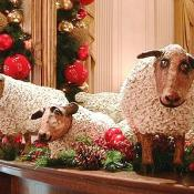 These three sheep were brought to the White House by President Woodrow Wilson during W.W.I. to keep the lawn of the White House neat and trim