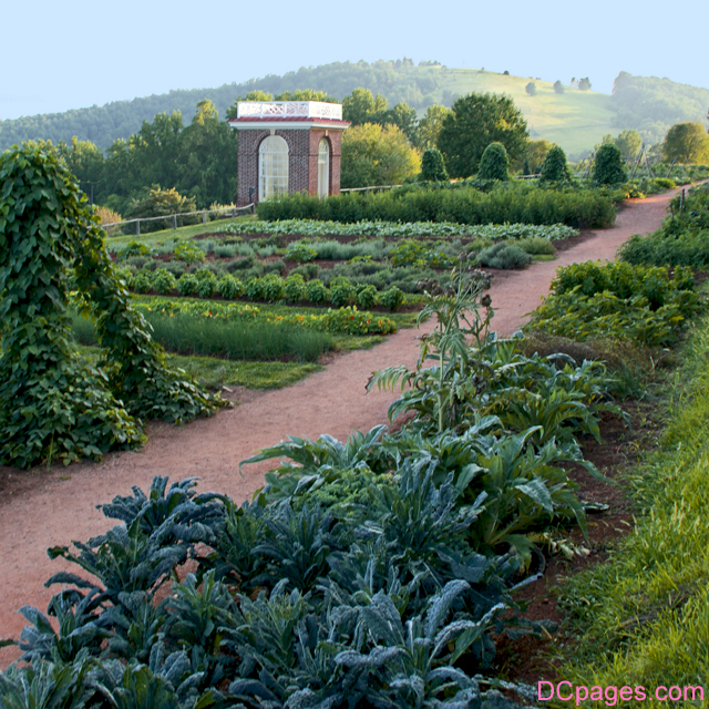 Thomas Jefferson's vegitable garden in Virginia