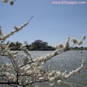 Jefferson-Memorial-03-31-10-B
