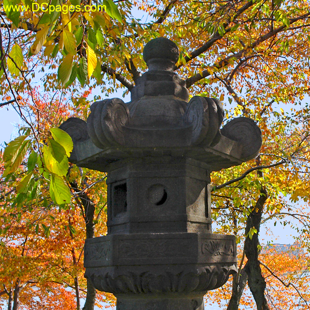 Yoshino cherry tree foliage surround Japanesse lantern.
