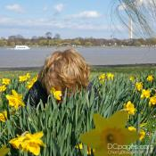 Smelling the Daffodils