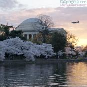 Plane flying above the Jefferson Memorial