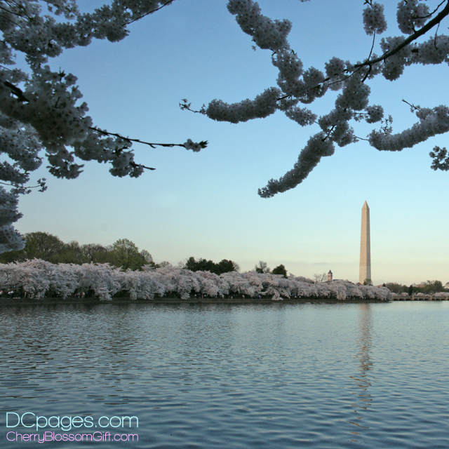 Washington Monument reflecting in Tidal Basin