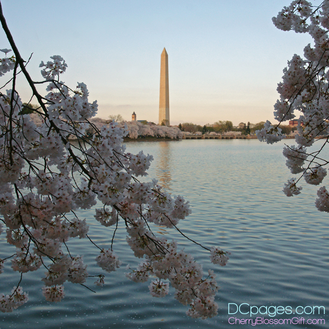 Across the Tidal Basin