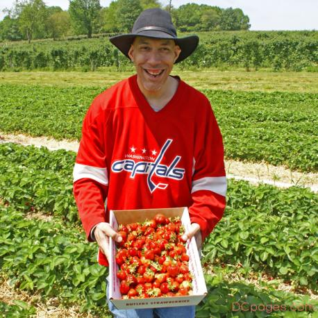 Pick Your Own Strawberries at Butler's Orchard