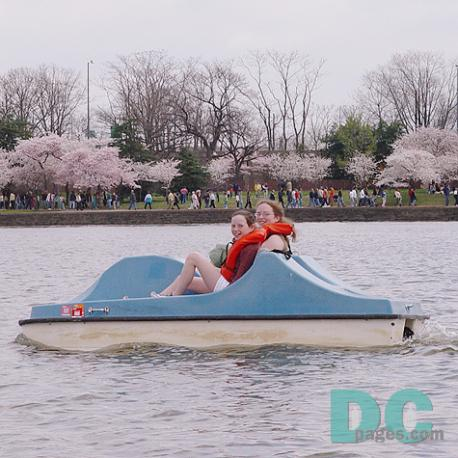 Paddle Boating on the Tidal Basin