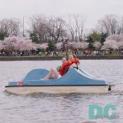 Paddle boating around the tidal basin is easy and fun.