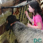 A sheep and child look at a hen nesting in the hay.