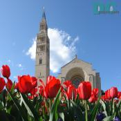 Tulip view of the National Shrine of the Immaculate Conception.