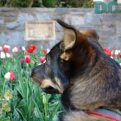 DCpages reporter, Denali, admires the National Cathedral garden.
