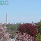 Spring flower view of the Washington Monument and U.S. Capitol building from Arlington National Cemetary.