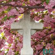 Easter cherry blossom flowers surround a marble cross.