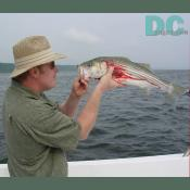 It took a long bloody battle for Jerry to look at a Rockfish in the mouth.