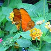 Butterflies see a broad range of colors including shades of red, yellow, orange, pink, purple, and lavender.