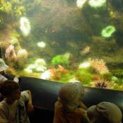 The zoo has feeding shows, and kids can learn how the sea urchins eat.