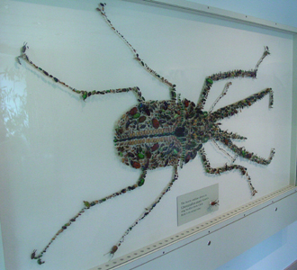 A beetle mosaic composed of beetles