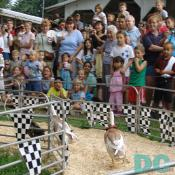 Duck also raced at the fair