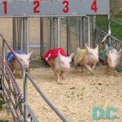 The gates have opened. The piggies are in the race.