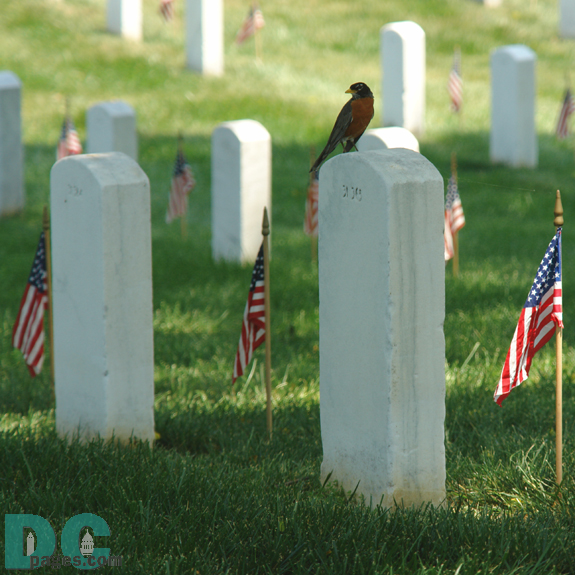 A little bird rests on a soldier's tombstone at Arlington Cemetary.