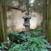 150 year old Japanese garden lantern placed within a grove of Cryptomeria.