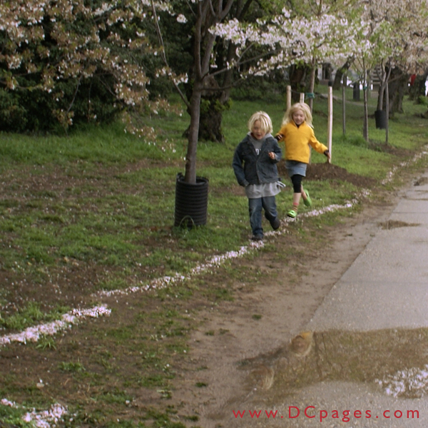 Wednesday, 11:39 am EST, April 4, 2007, Two children have fun following cherry blossom trail washed up from the storm.