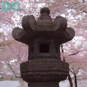 Wednesday, 10:00 am EST, April 13, 2005, Japanese Peace Lantern