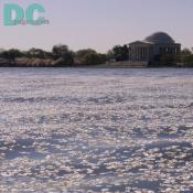 Monday, 9:20 am EST, April 11, 2005, Cherry Blossom floating in the Jefferson Tidal Basin. Sunny with a crisp breeze. Third Stage of Flower Bloom