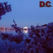 Sunday, 8:30 pm EST, April 10, 2005, Cherry Blossom View of the Jefferson Memorial. Clear Skies. Third Stage of Flower Bloom