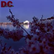 Sunday, 8:30 pm EST, April 10, 2005, Cherry Blossom View of the Jefferson Memorial. Clear and Sunny. Third Stage of Flower Bloom